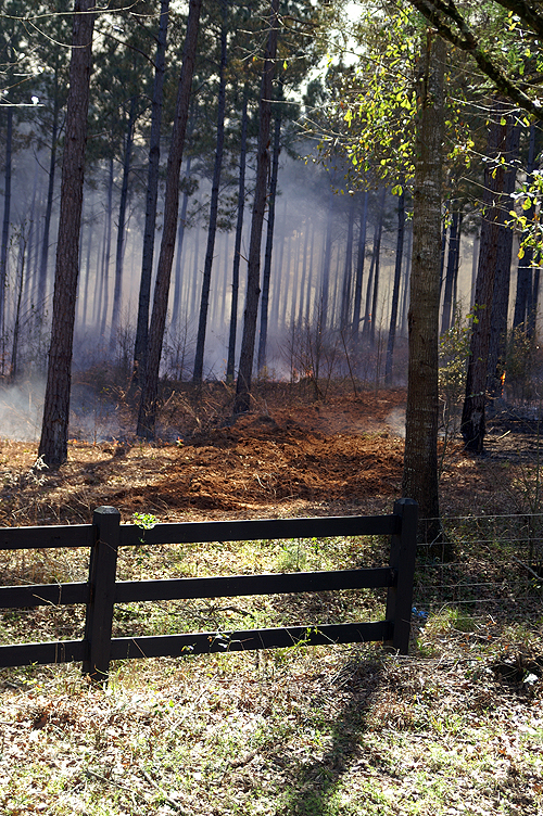Fire Break in a controlled burn
