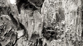 Great Horned Owl peaking with one eye in tree hallow