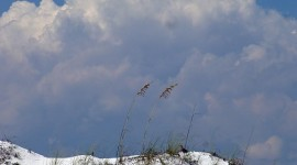 sea oats with thunderhead