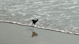 Grackle at the beach