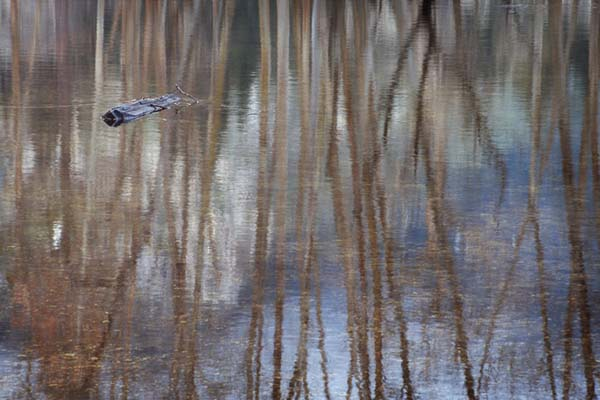 Reflection, Merced River