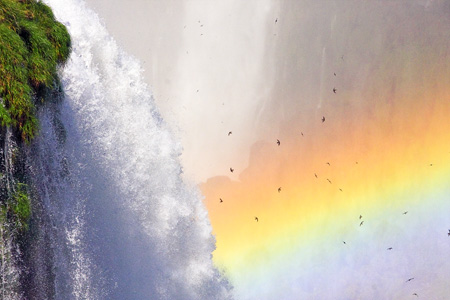 Brazil, Iguazu waterfall , the birds fly around the water with rainbow in the backward