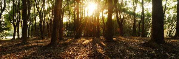 Nature-Forest-Sunlight-Photography