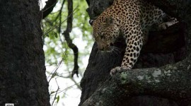 photography-genre-philosophy-leopard