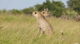 cheetah-brothers-photo-safari-team-building-copy