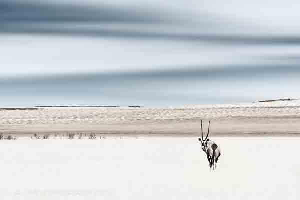Oryx Antelope Fine Art | African Wildlife & Nature Images |