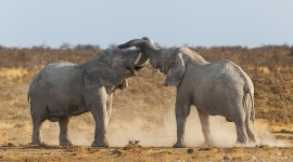 African Elephant Fight | Wildlife Photographer Africa