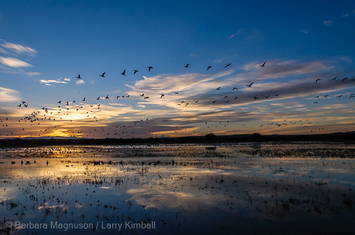 Sunrise over Bosque del Apache